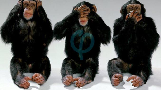 3 singes Phi